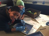 Avi and Joseph are all smiles while dissecting