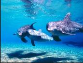 Los Delfìns