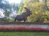 Moose International, Inc.