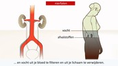 Werking van een nier