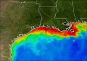 Gulf of mexico dead zone