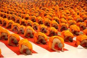 Buddhists meditating