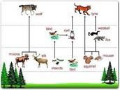The abiotic and biotic factors