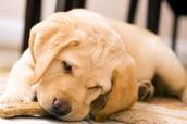 La Patte Verte est un magasin en ligne vous proposant une gamme élégante de produits de qualité pour les animaux domestiques. L'accent est sur l'artisanal et surtout des produits écologiques et naturels.
