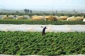 Farmers in Jordan.