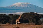 #3 Mount. Kilimanjaro