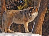 wildlife-protectors.weebly.com