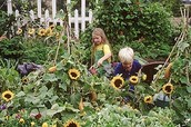 FAMILY ORGANIC GARDEN PROGRAM –------------ Fridays, Apr. 15 –June 17, -----3:30–5 pm