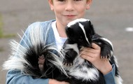 This skunk has a friend