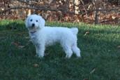 Mi perro Charlie