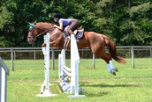Ruby My 4th horse