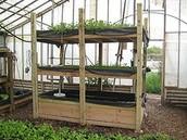 Hydrophonic plants