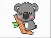 Khloe the koala