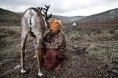 A man Ties Something Around A Hurt Animal