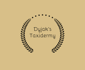 Dyjak's Taxidermy
