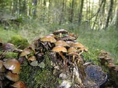 Why are Mushrooms in the Environment important?