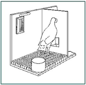 the Skinner Box - Pigeon