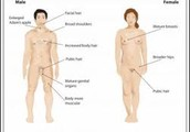 physical changes males/females