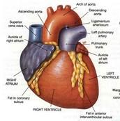 Affect Heart?