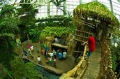 A Location in the Amazon Rain Forest for Children