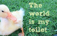 Our animals may think that phrase is true!