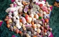 Ecuador Seashells
