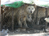 Dogs who are crammed into small cages with no food or water.