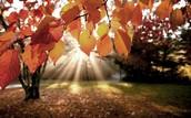 Vanaf september zal de herfst weer komen en dit blijft niet ongemerkt bij de action, zo hebben wij alles om u deze herfst heerlijk warm thuis te kunnen laten zitten