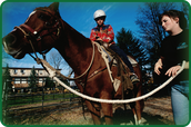 Did you know that quarter horses are easy to train?