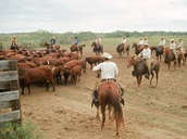 The Birthplace of American Ranching