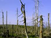 Acid Rain Made Dead Trees