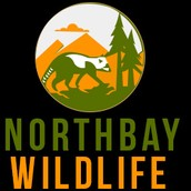 Humane Wildlife Removal & Control Services in North Bay