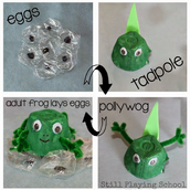 Create a Frog Life Cycle