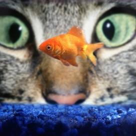Libby Lancaster profile pic
