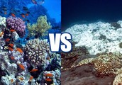 The Main Issues with Coral Reefs