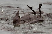 WHAT HAPPENED HAPPENED TO THE ANIMALS AFTER THE BP OIL SPILL