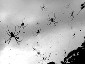 Spiders In The Sky!?! ;o