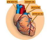 תיאור כללי של הלב ותפקידיו
