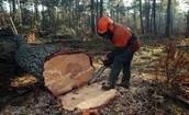 Ne détruis pas la forêt!