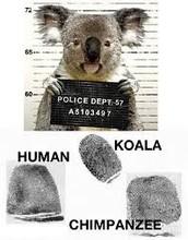 Forensic Fingerprint Expert