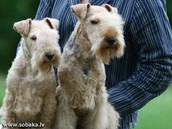 tipes of dogs