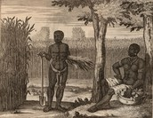 Slaves in a plantation