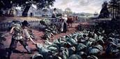 Jamestown Tobacco