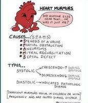 What is a Heart Murmur?