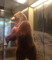 un oso.