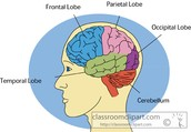 Did you know your brain is a muscle?