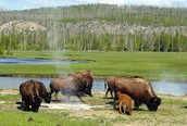 Yellowstone Current