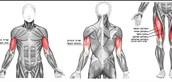 תמונת הסבר על הידיים והרגליים