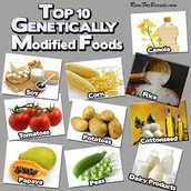 Top 10 GMO's (Genetically Modified Organisms)