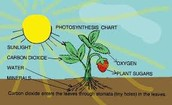 Why is sunlight important to the process of photosynthesis?